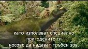 Разхождайки се с Динозаврите Субс еп5 - Духове на ледената гора Walking With Dinosaurs 1999