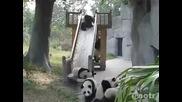 Много Сладки Панди