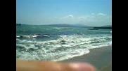 Умряло делфинче на брега в крайморие