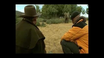Дали Слоновете Се Страхуват От Мишки?