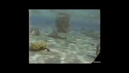 Ted:подводни Открития.flv