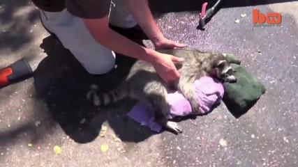 Добри хора спасяват миеща мечка с ъглошлайф