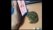 Жаба иска още да играе