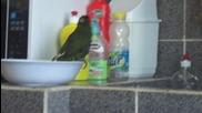 папагал се къпе