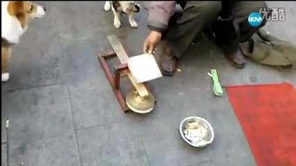 Куче може да брои