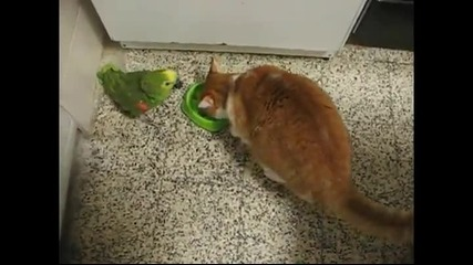 Нахален папагал получава котешки шамари!