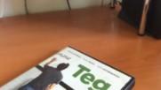 Българското Dvd издание на Тед 2012 А Плюс Филмс 2013