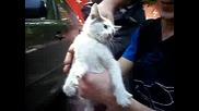 Луда руска котка