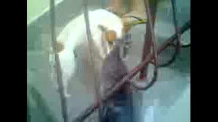 куче изнасилва котката Пешо