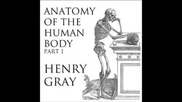 Anatomy of the Human Body (full Audiobook) - part (1 of 39)