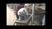 Моля ви споделете това видео за да види света какво правят Китай !!!