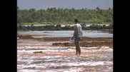 Одисеята на Жак Кусто - Маркизките острови