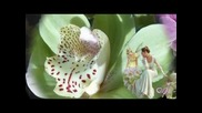 Waltz - Orchidee