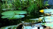 Water Lilies Blooming (timelapse) by Vincenzo Di Nuzzo