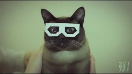 dubstep cat
