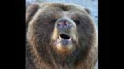 За мечки - Бг хумор