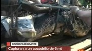 Гигантски Крокодил