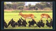 В обектива: Необичайното поведение на животните - 16 - Боен клуб