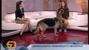 Училище за кучета Послушен Tv7 (бодилник)