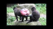 Вътрешността на ауспуха на маймуна [с М Я Х]