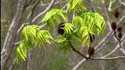 Kitaro - Theme Of Silk Road - Quarryhill Botanical Garden - for William Mcnamara and staff