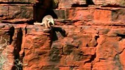 Дикая Австралазия. Часть 2. Сердце пустыни