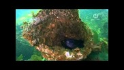Подводни създания