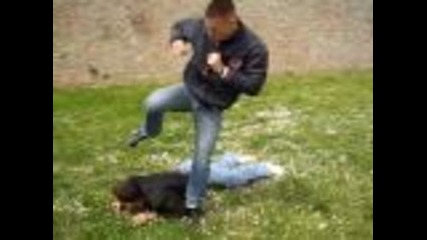 Street Fight real martial arts