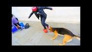 Sean Garnier срещо куче