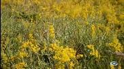Ветровити поляни с жълти цветя