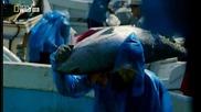 Мисия: Да спасим Океаните: Епизод 1+2
