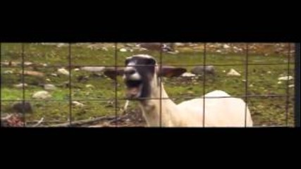 Funny Taylor Swift - I Knew You Were Trouble Goat Edition (hd)