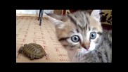 Коте срещу костенурка:):)
