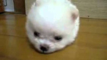 Кученце-пухче :)