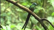 Animal Planet - Incredible Nature Hummingbirds Magic in the Air