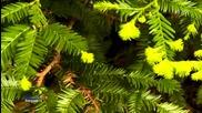 Brian Crain - Evergreen (relaxing music & beautiful nature)