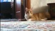 Най - смешната котка в целия интернет! [ridiculousness]