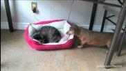 Котки и кучета в борба за леглото.