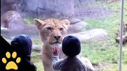 Децата в зоологическата градина , Compilation