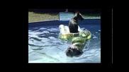 tug boat dogs