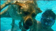 charlestrippy, underwater, puppy, diving, dog, crazy, pet, tricks, bikini, cute, funny, awesome, pup