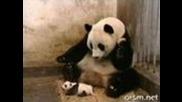 Колко сладко киха малка панда !