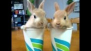 Най - сладките зайци *дали ще се справите със сладкостта им*