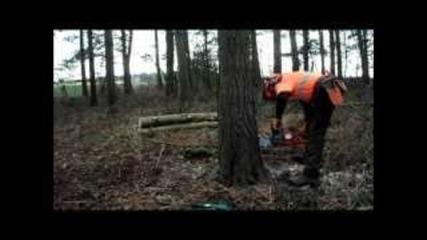 Husqvarna 560 Xp Felling Pine Tree