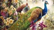 Райски птици в райската градина