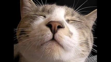 лигава котка