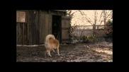 История за най-преданото куче на света