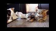 While Mom is napping | Funny Cats