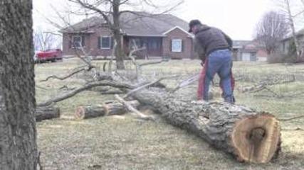 Stihl Ms261 Chainsaw Falling, Bucking, & Limbing
