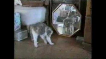 Компилация На Глупави Котки